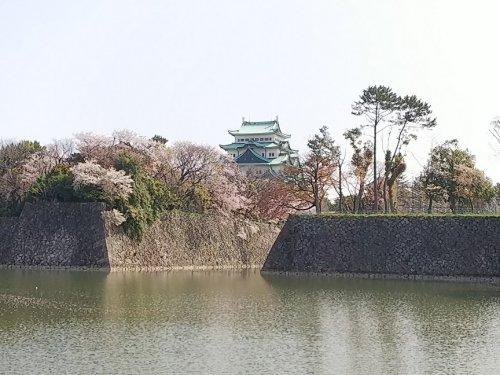 07名古屋城桜