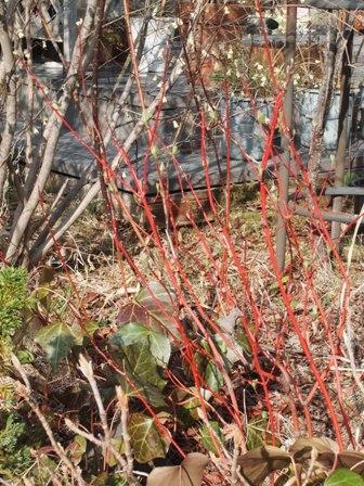 my-garden 008 (3)