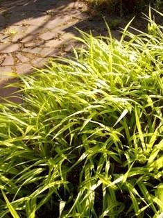 my-garden 004 (4)