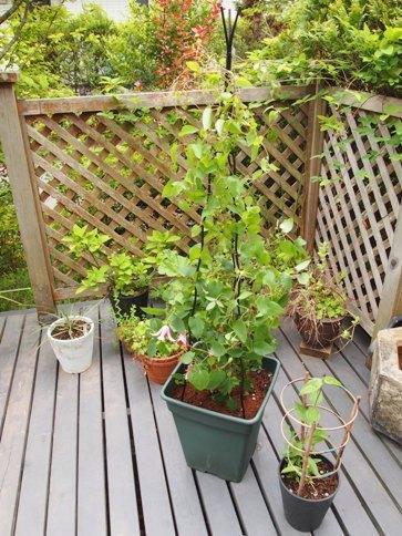 my-garden 149