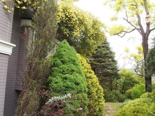 my-garden 135 (2)