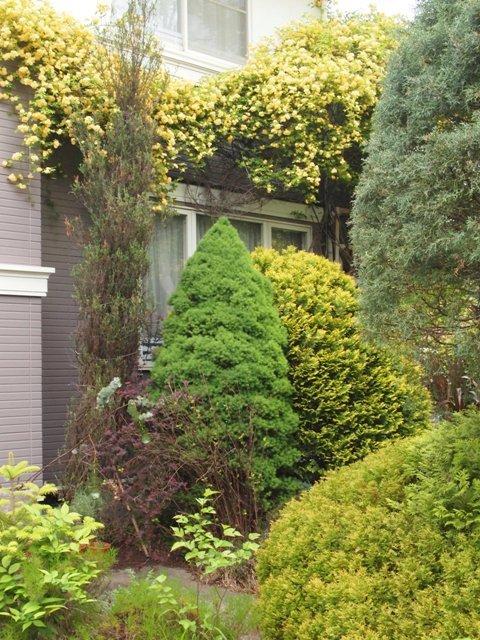 my-garden 129 (2)