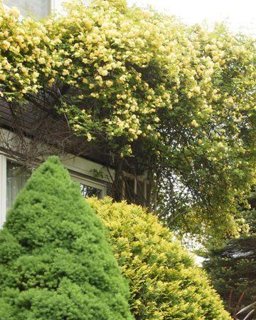 my-garden 138 (3)