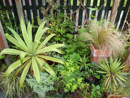 my-garden 051
