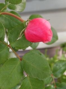 my-garden 014 (2)