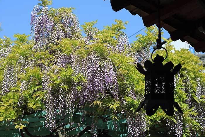 漢国神社 饅頭まつり4