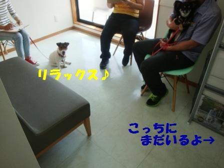 DSC06024-11.jpg