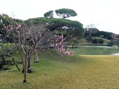 南国クルーズ131沖縄識名園庭園