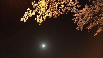 満月と夜桜2
