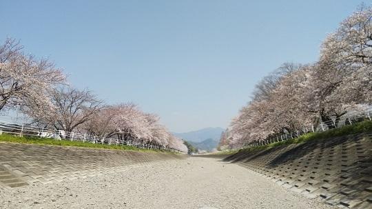 2018桜2