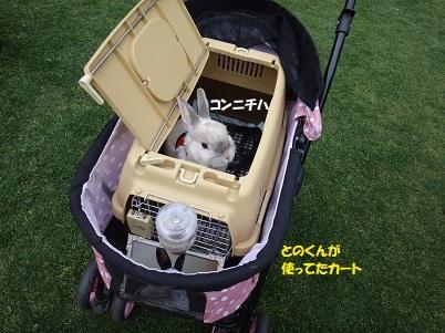 DSC09730 - コピー