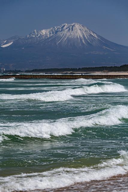 大山 日本海 河津桜 大根島