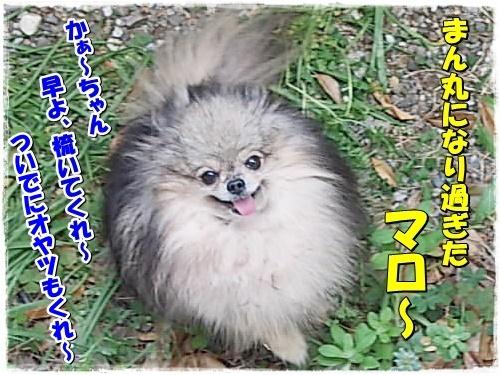 DSCN9959_20180420110442b12.jpg