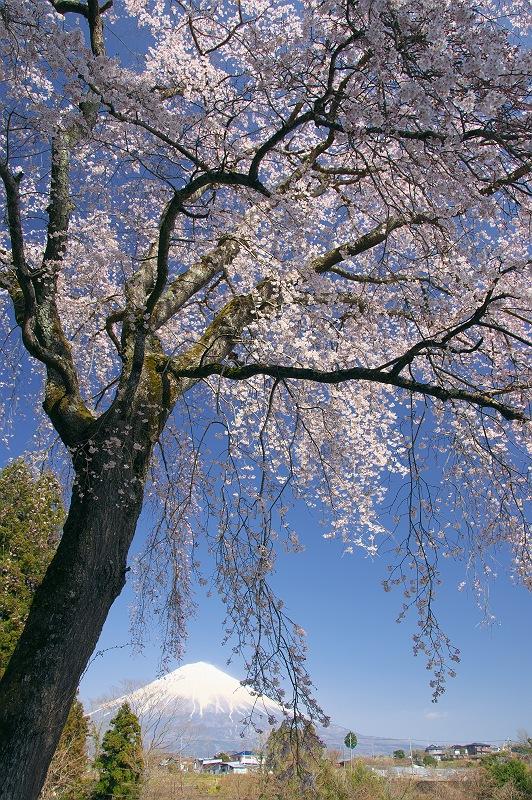 晴れ渡る春の日に