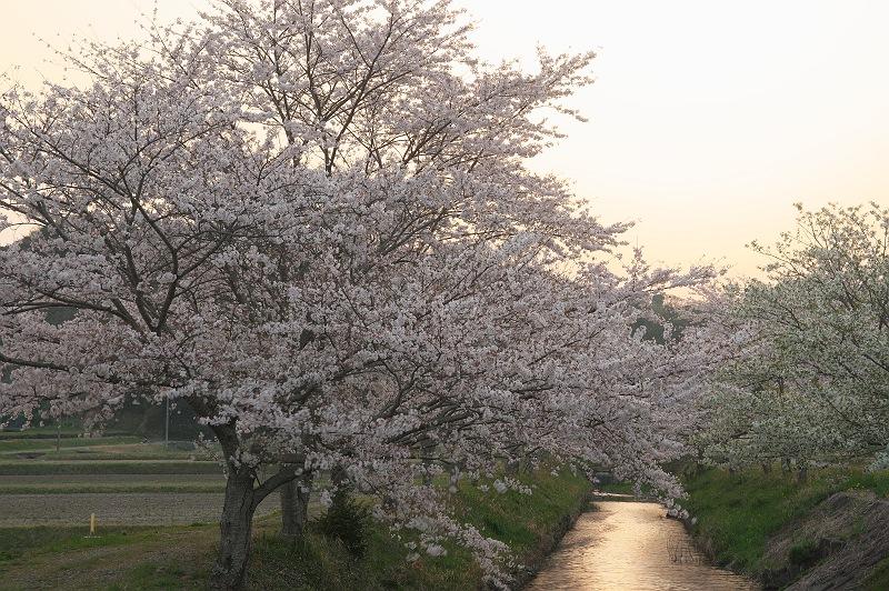 今年もやってきた春