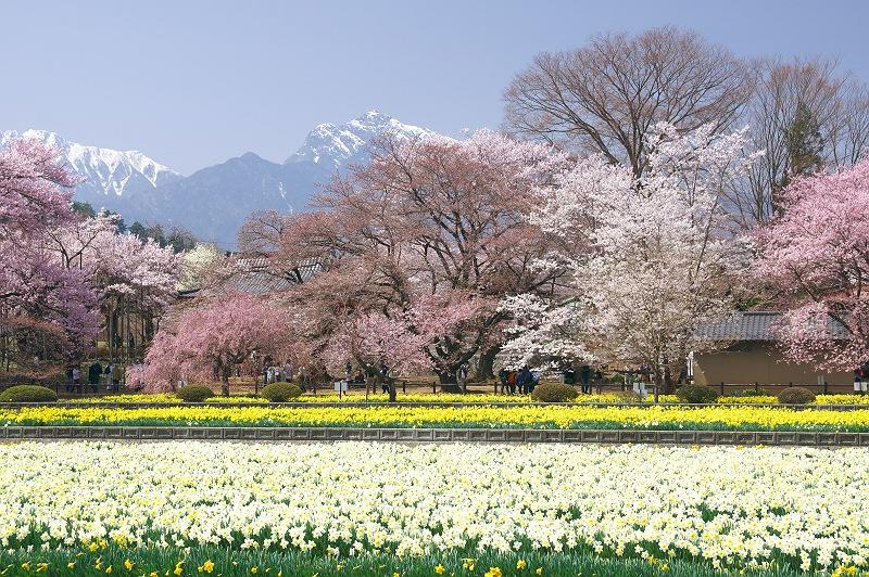 実相寺に訪れる春