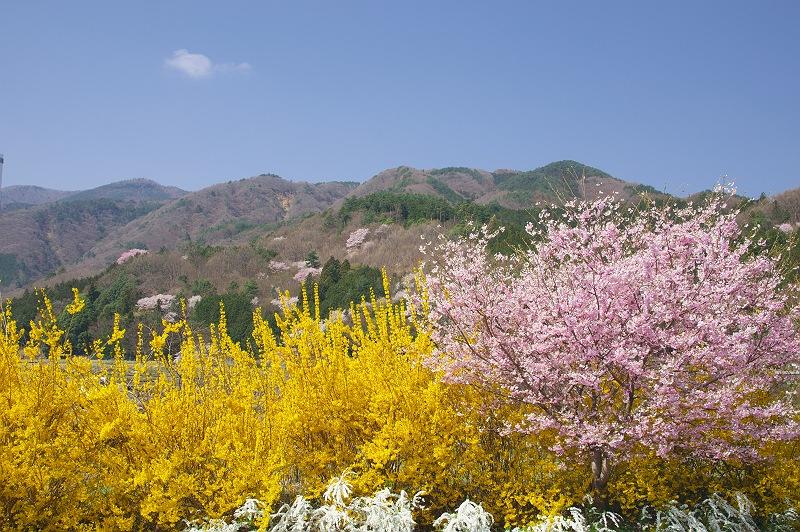 春の里 春の色