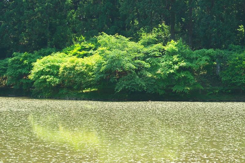 新緑の水辺