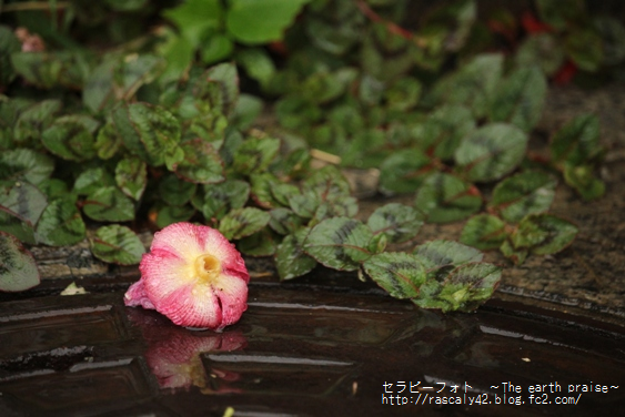 Photo therapy364 雨の日には