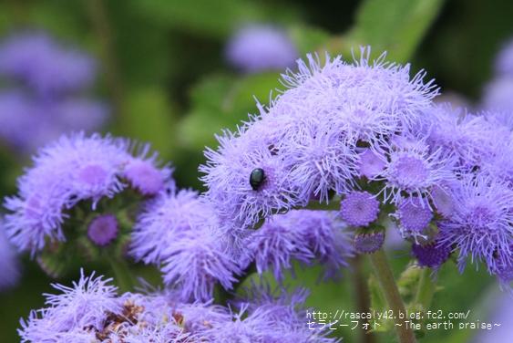 Photo therapy372青い花