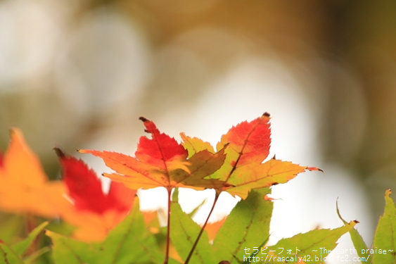 Photo therapy394ご縁