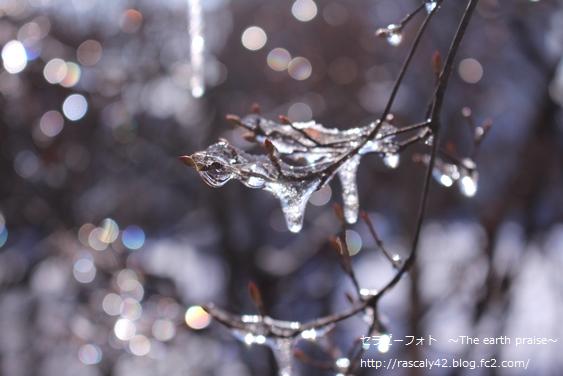 Photo therapy486 冬の氷 春の雫