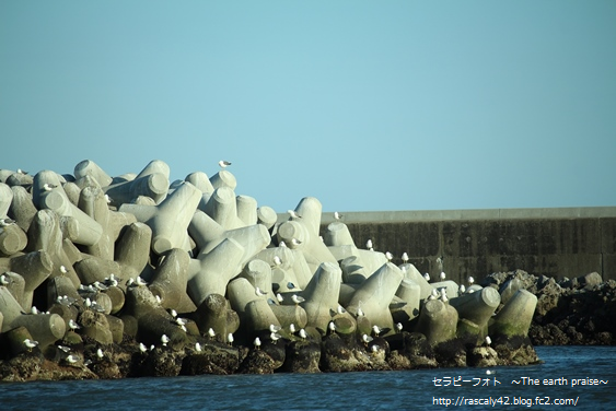 Photo therapy527海に咲く白い花