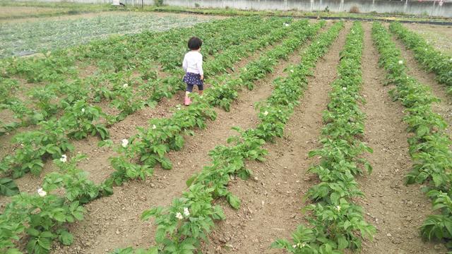 植えるのを手伝ってくれたジャガイモの畑の中で