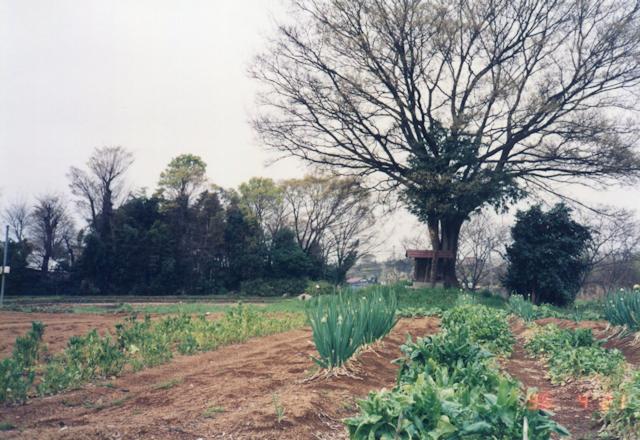 20年前の日野 金山神社の風景