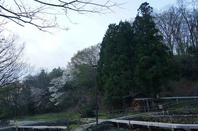片倉公園 水車の春