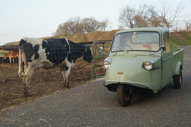 ミゼットと牛