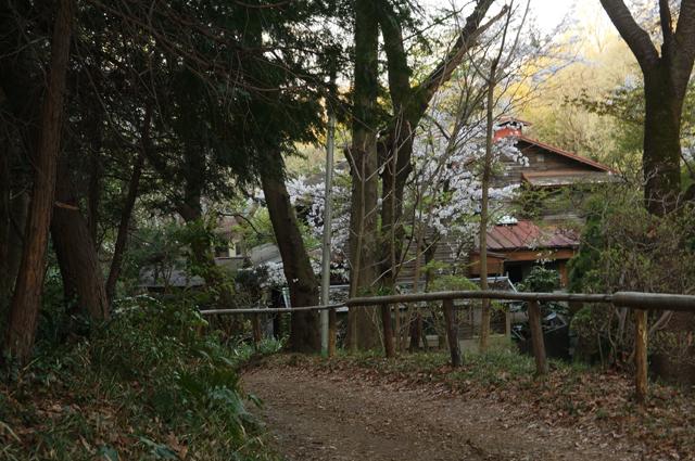 鎌田鳥山の春