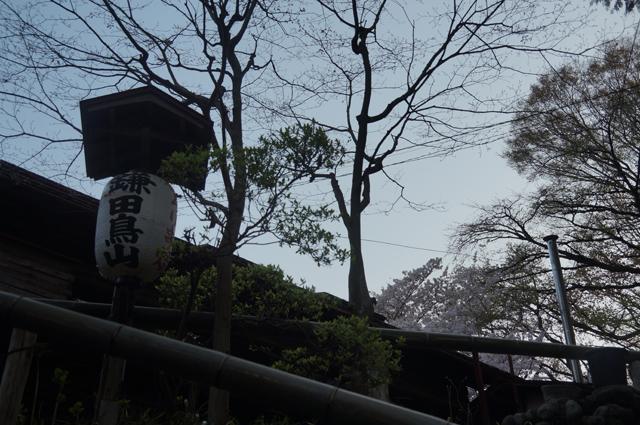 鎌田鳥山の陣笠煙突と桜と屋根