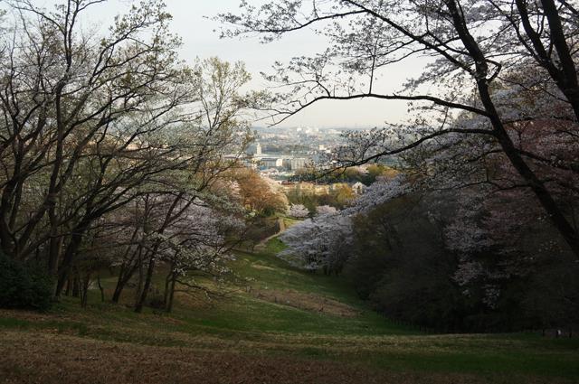 長沼公園 殿ヶ谷の春