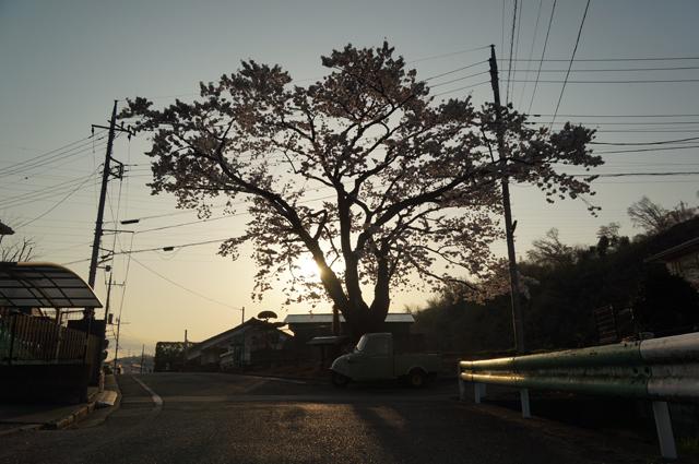 長沼の桜の花の下でミゼット