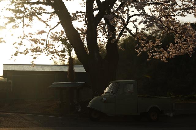 長沼の桜の木の下でミゼット