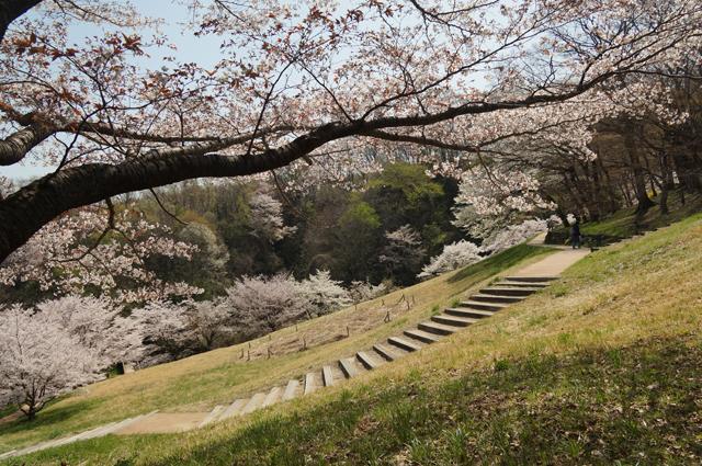 長沼公園 殿ヶ谷の桜咲いた春