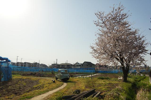 ミゼットと農道と桜