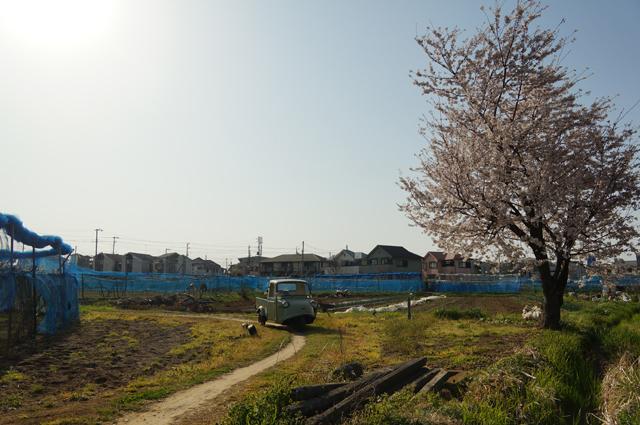 畦道と桜とミゼット