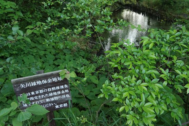 矢川緑地の南側の入口