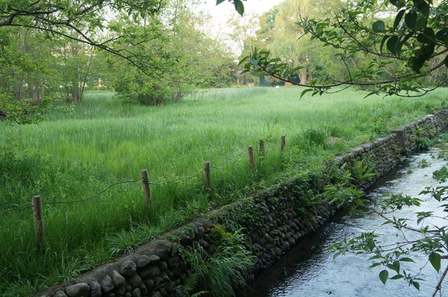 矢川緑地の矢川と湿地