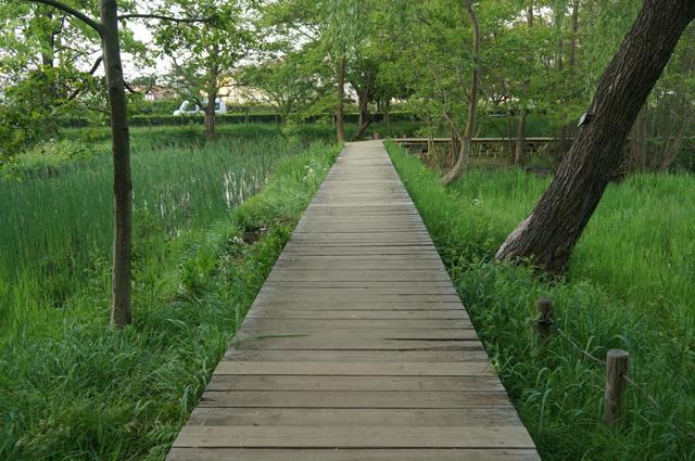 矢川緑地の木道