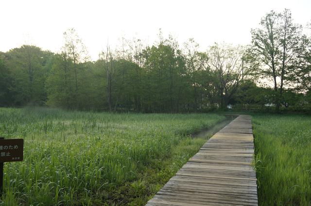少し靄が出ている矢川緑地