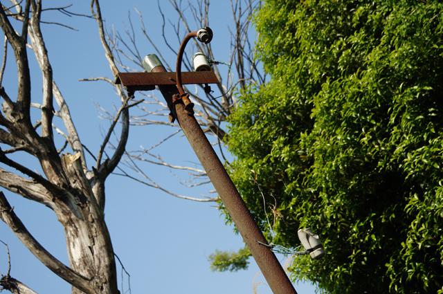 お伊勢の森にそびえる、朽ち果てた街路灯