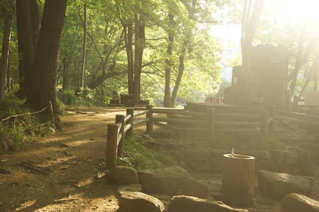 朝日を浴びる黒川公園