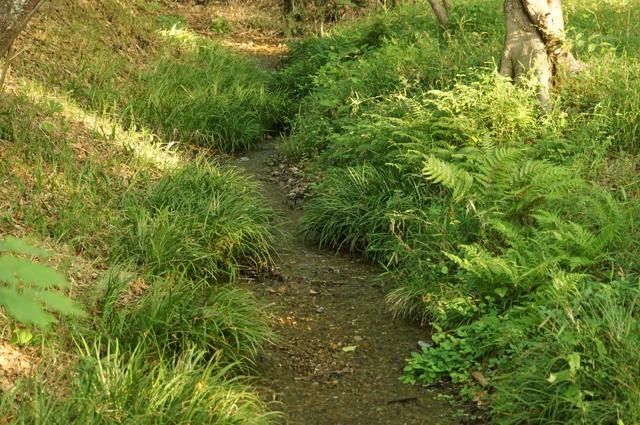 黒川公園の湧水の流れる小川