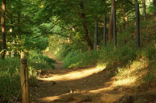 黒川公園の遊歩道