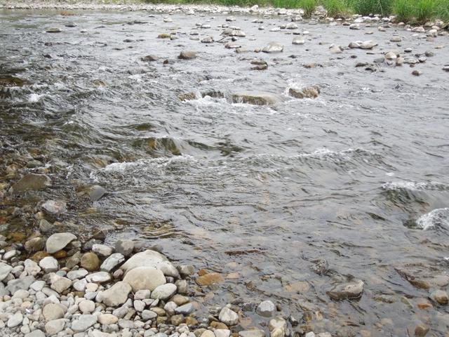 秋川の清流 鮎がうようよいそう