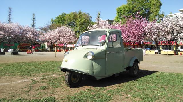 国立の八重桜とミゼット