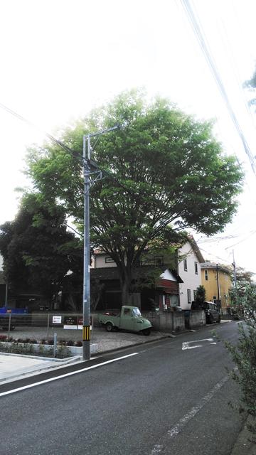 大きな欅の木とミゼット
